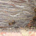 Tipps, wie man lästige Wespen vertreiben kann