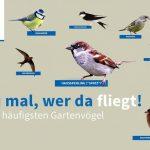 Top 10 Gartenvögel erkennen