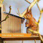Videotipp: Futterhaus für Eichhörnchen