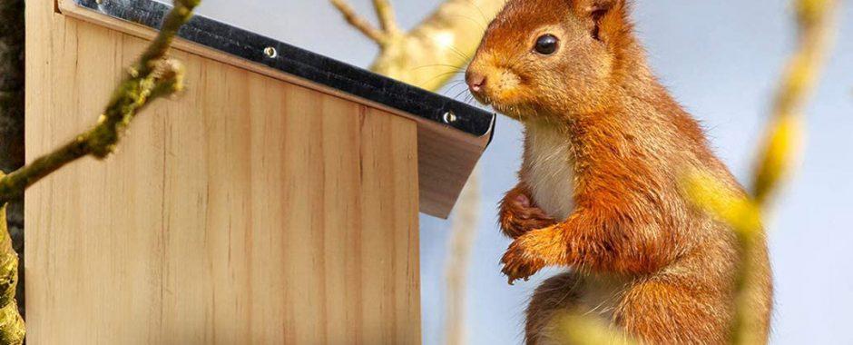 Futterhaus für Eichhörnchen